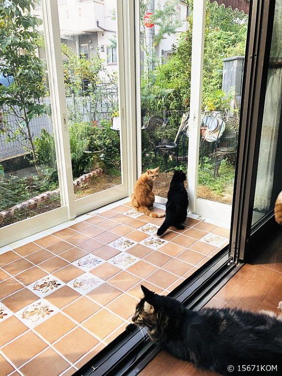 大阪府 6 cats 様